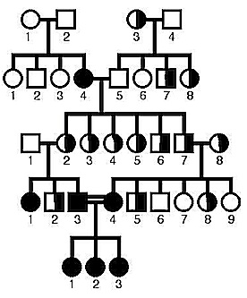 Consanguineous  marriage pedigree