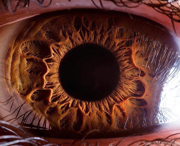 eye ball beautiful anatomy physiology
