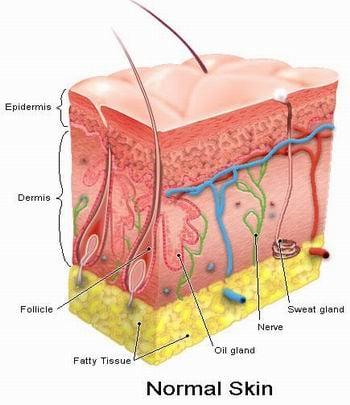 Skin-diseases1